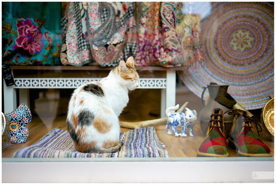 Salz auf Reisen, Katze im Schaufenster, Istanbul, Türkei
