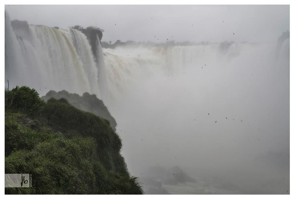 Iguazufälle Vögel in Wasserfall, Argentinien