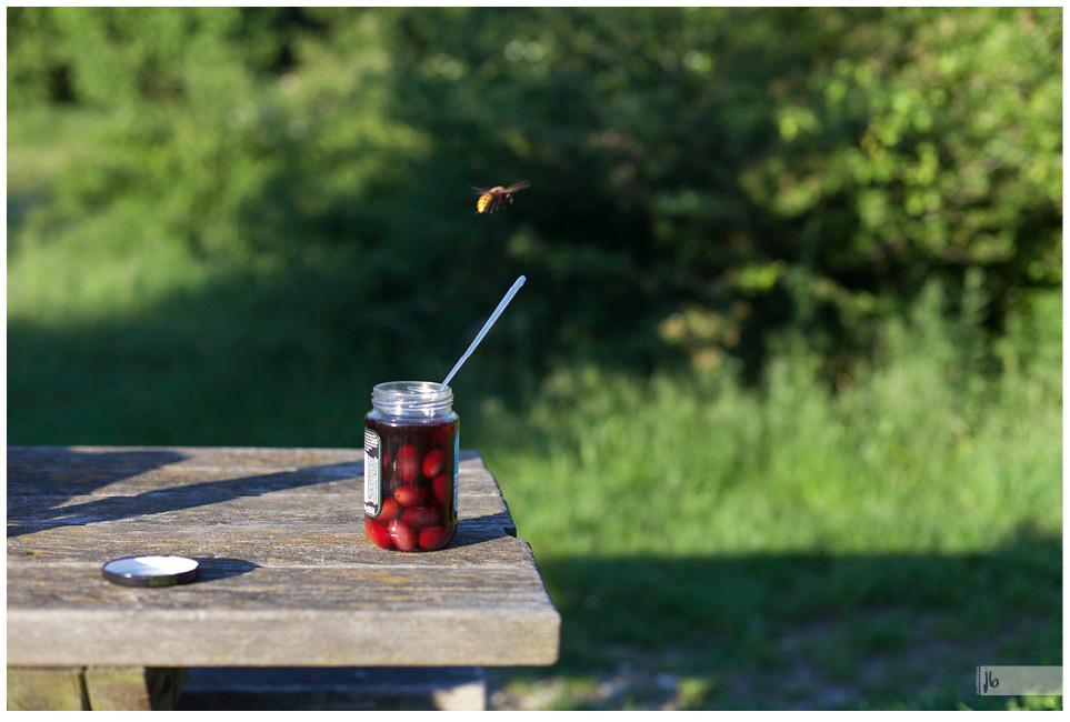 Salz auf Reisen, Biene fliegt über Olivenglas, Bienenflug, Olivenglas, Wien