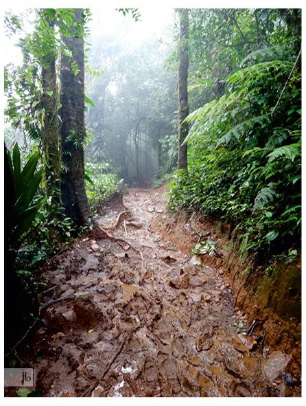 Matschboden im Urwald, Costa Rica Regenwald, Nebelwald Costa Rica