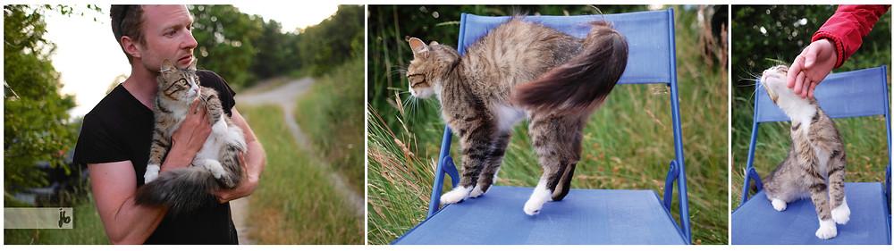 Katze, Katzenbesuch beim zelten