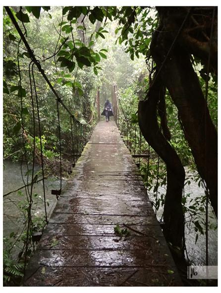 Brücke im Regenwald, Costa Rica Regenwald, Nebelwald Costa Rica