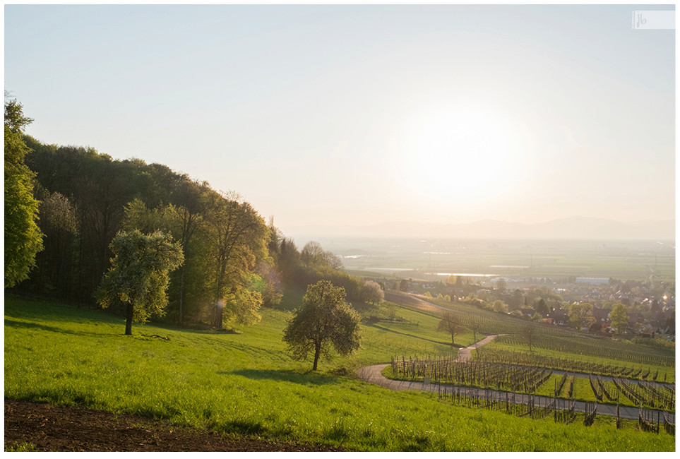 sonnenuntergangseite Weinberg, Sonnenuntergang, Weinberg, Elsass