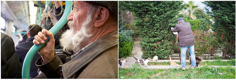 alter Mann, füttert Katzen