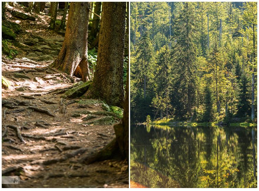 bayerischer Wald mit See, Waldboden