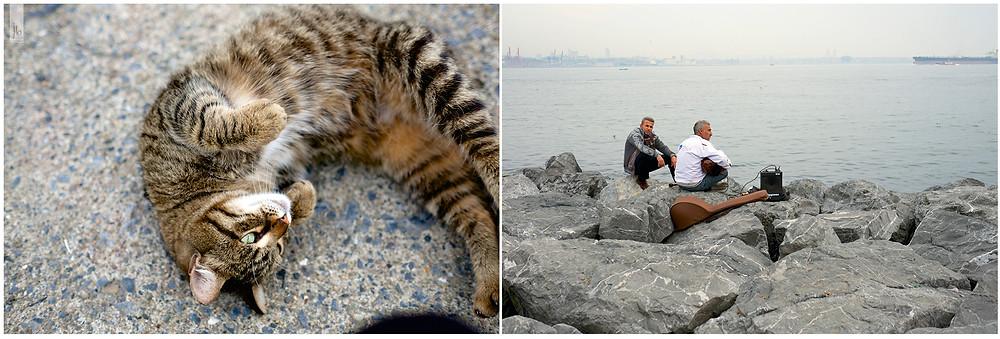 Katze, Musiker am Bosphorus