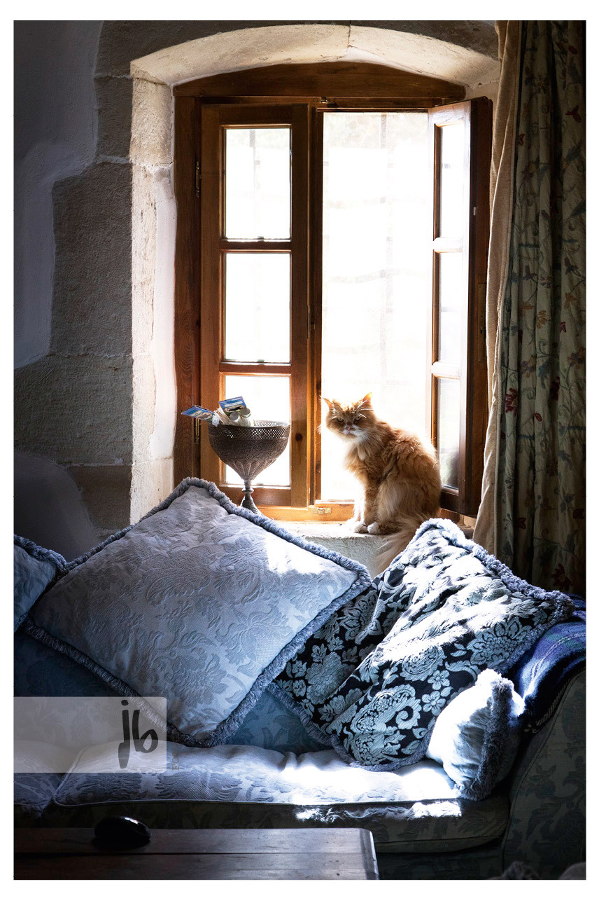 rote Katze Fenstersims, Tierärztepool, Arche Noah Kreta