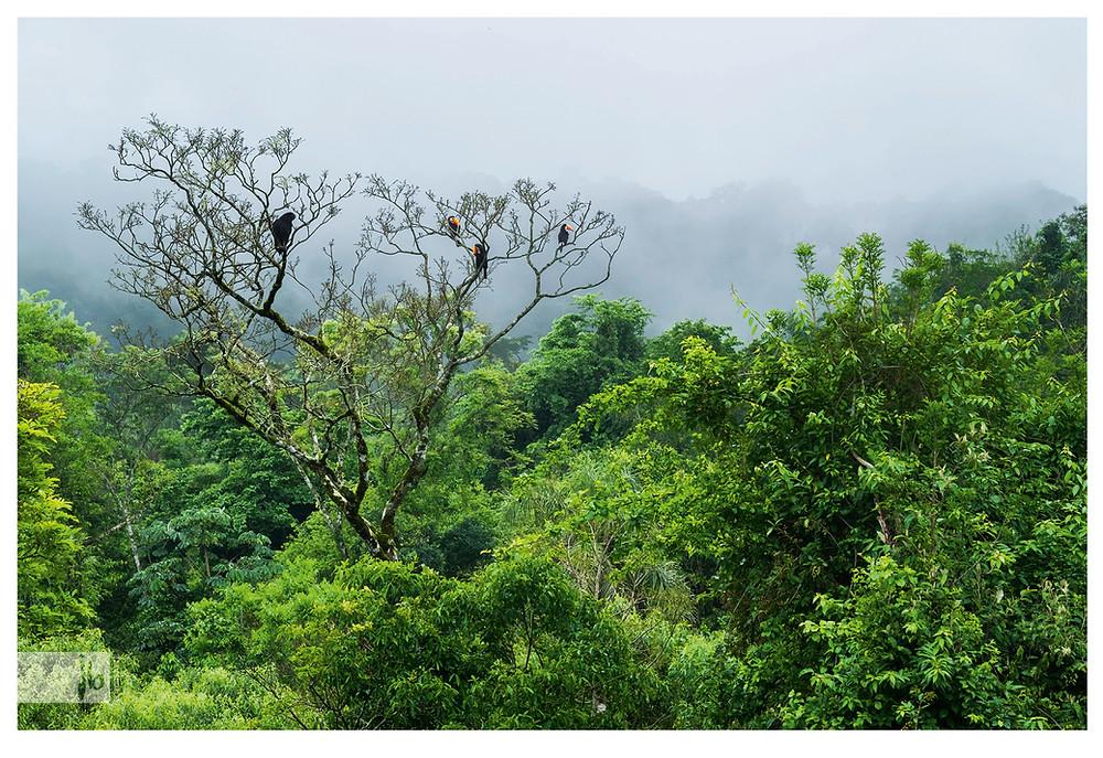 Tukane in Iguazu, Argentinien, Wald, nebel
