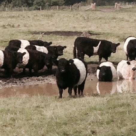 How We Produce *Guilt-Free* Beef and Lamb....,
