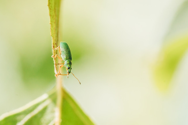 Naturdoku | Rüsselkäfer