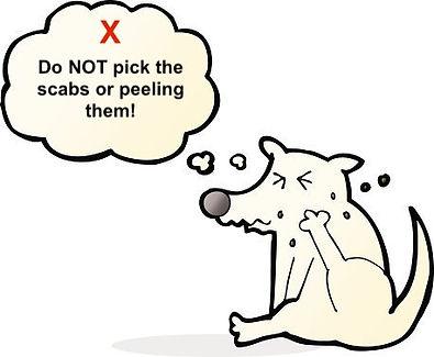 dog scratch.jpg