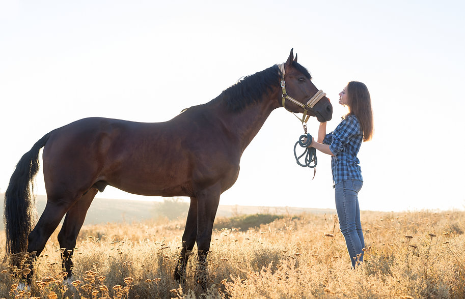 Pferde_führen.jpg