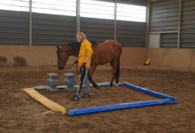 Pferd im Einzelcoaching