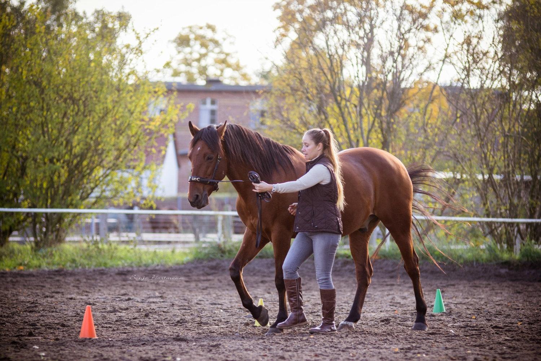 Einzelcoaching mit Pferd