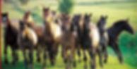 Pferde beim Freilauf vor dem coaching.jp
