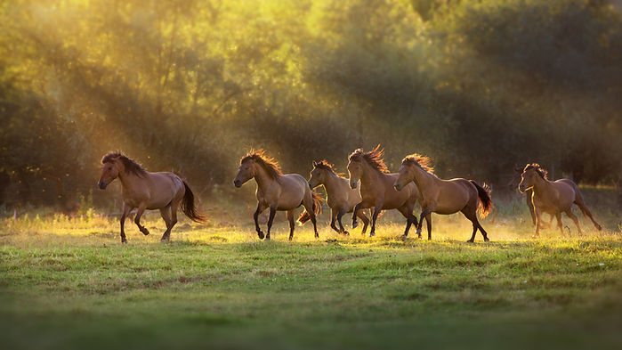 Pferde_Herde_coaching-am-pferd.jpg