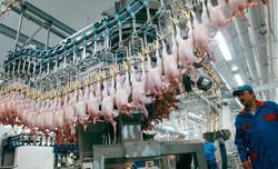 T930454-Poultry_factory_production_line-