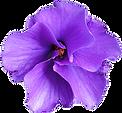 purple-flowers.png