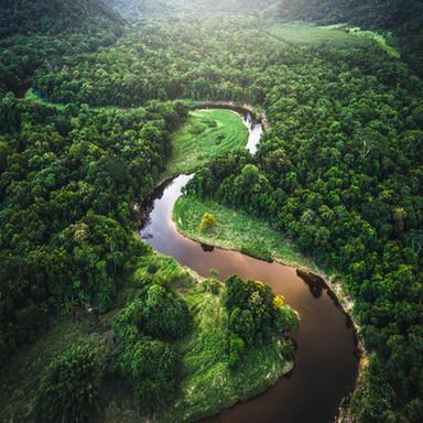 Schutz der Wälder