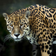 Tier- & Artenschutz