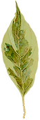 yamaplant03.png