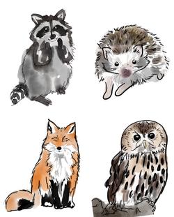 Nursery Illustrations.