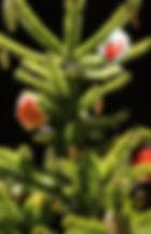 arbre_noel.jpg