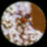 cercle_cache5.png