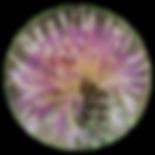 cercle_cache1.png