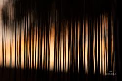 Últimas luces. Naturaleza In-Quieta
