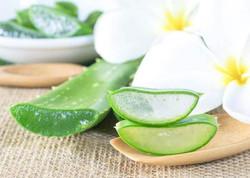 Aloe Vera for Soft Healthy Skin