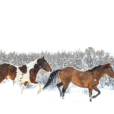 2014-12_Christmas Horses_0720_RT_Cropped