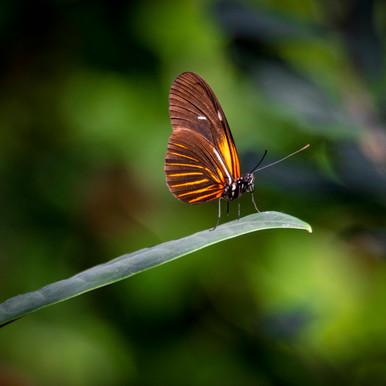 2018-11_Butterflies_0151.jpg