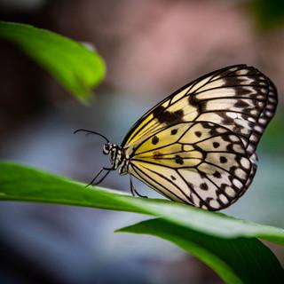 2018-11_Butterflies_0162.jpg