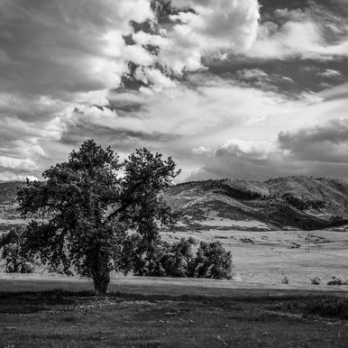 2017-06_Vulture, Sky and Tree_0049_RT_B&