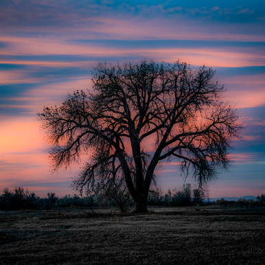 2018-11_Tree_0005_RT.jpg