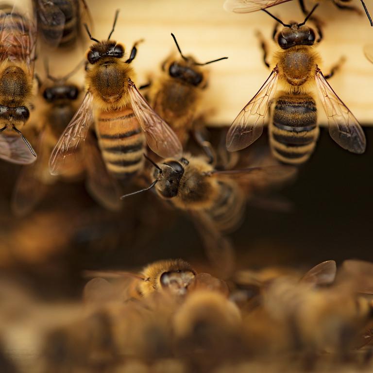 Backyard Beekeeping: An introduction #5
