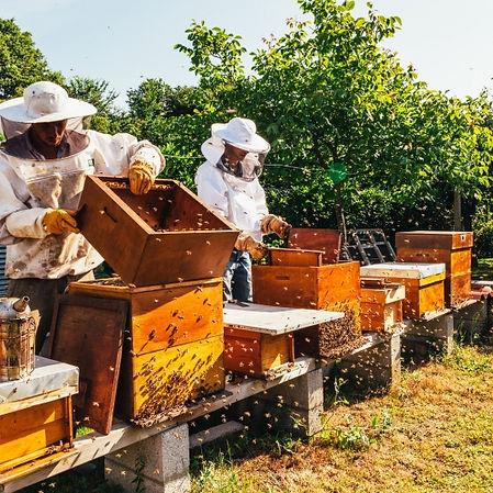 beekeepers hives_500_500.jpeg