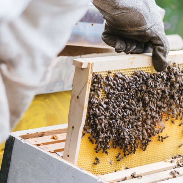 Spring Beehive Management #2