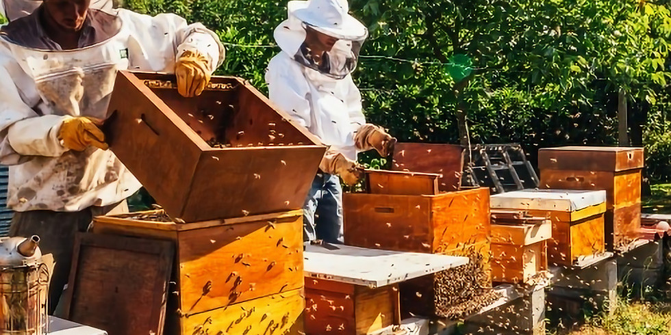 (SOLD OUT) Visit the Adelaide Bee Sales Apiary - Autumn Hive Inspection