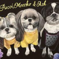 Pucci-Moocho&Ash