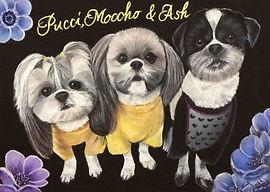 Pucci,Moocho&Ashちゃん