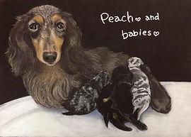 Peach&Babiesちゃん