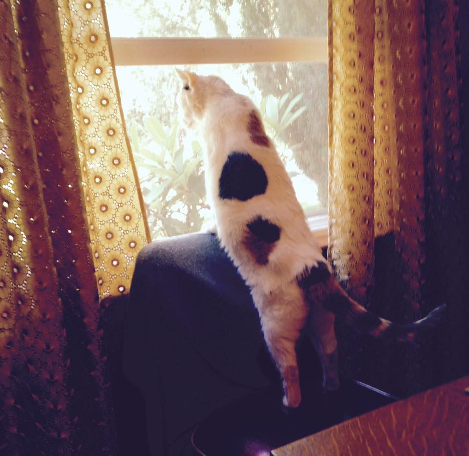 Persey at the window