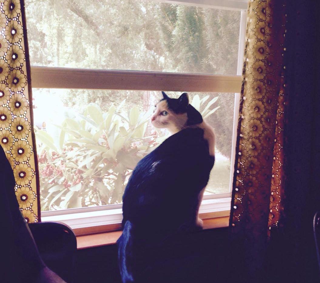 Pullo at the window