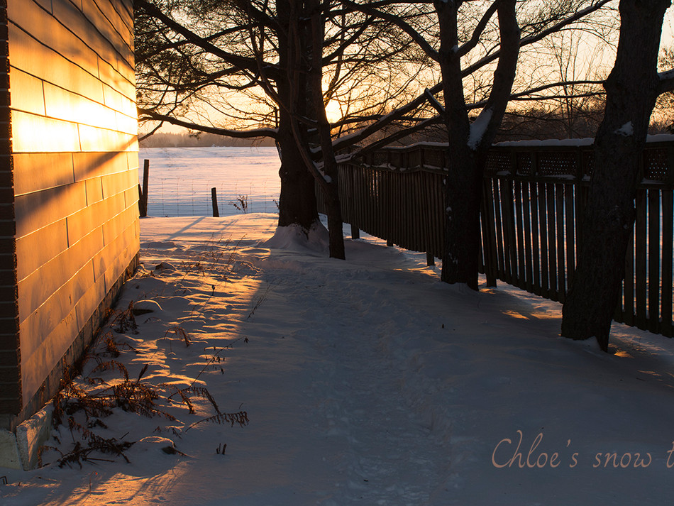 Chloe's snow trail
