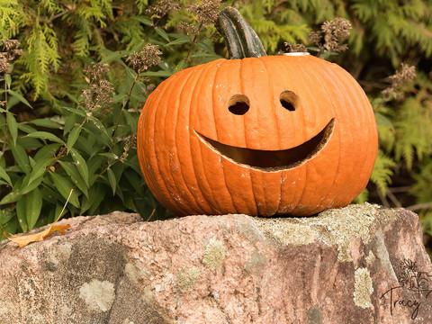 Neighbour's Happy Pumpkin