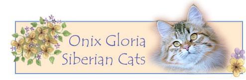 Onix Gloria Siberian Cats