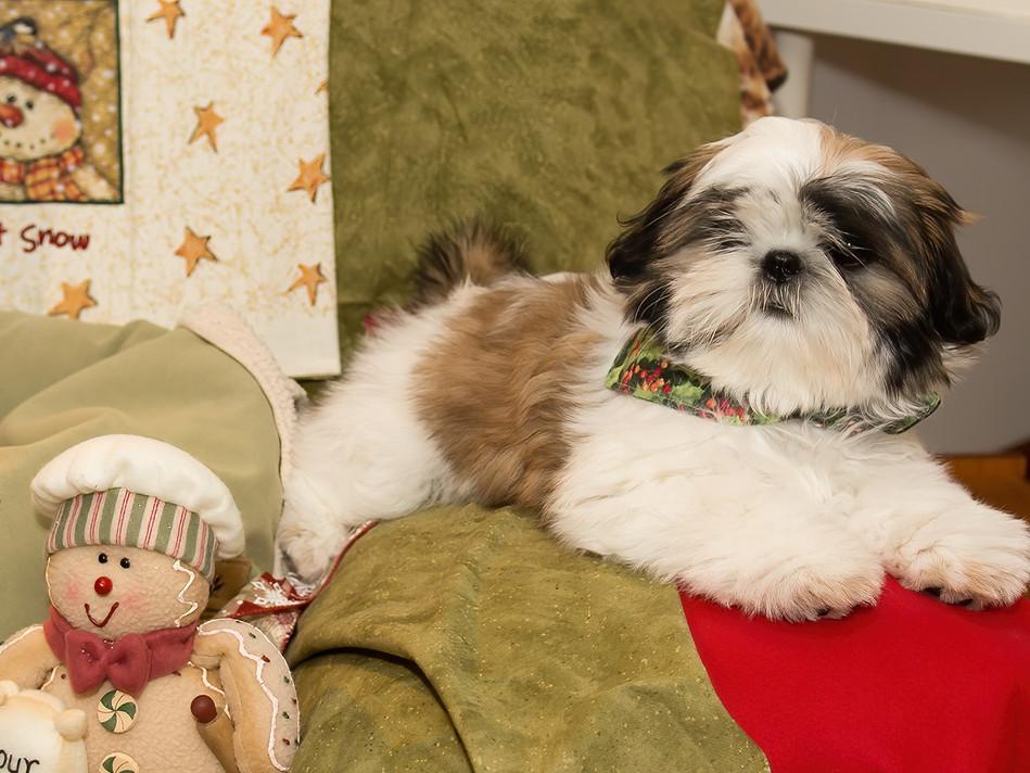Chloe at 13 weeks old