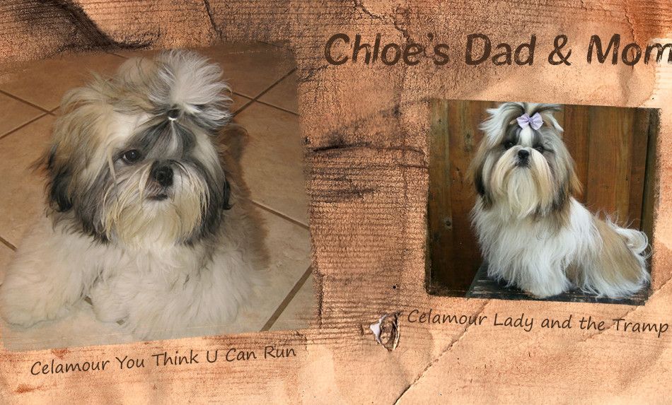 Chloe's Dad and Mom